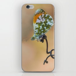 Anthocharis cardamines on curly branch iPhone Skin