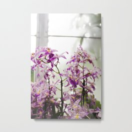 Orchids in Purple Metal Print