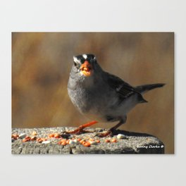 Male White Crowned Sparrow Canvas Print