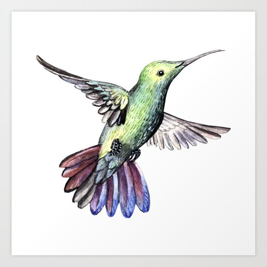 Bird hummingbird Art Print