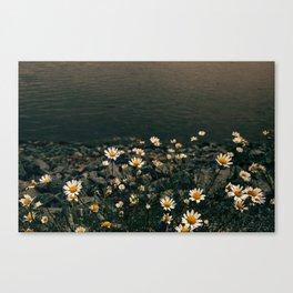 Daisy On The Salt Marsh Trail Canvas Print