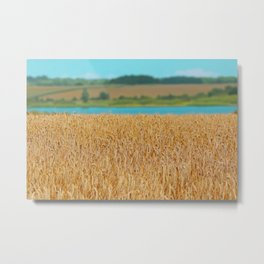Golden Corn by the Turquoise Water Metal Print