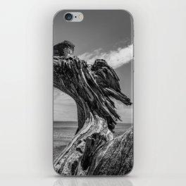 Whidbey Island Driftwood iPhone Skin