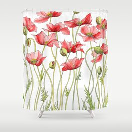 Red Poppies, Illustration Shower Curtain