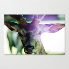 look at me. Canvas Print