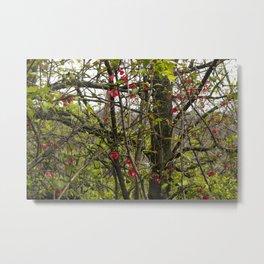 Red Blooms Metal Print