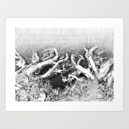 Transitions in nature part 2 Art Print