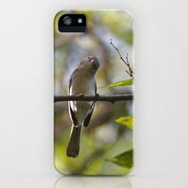 Blue-Grey Gnatcatcher iPhone Case