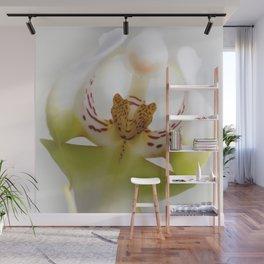 Phalaneopsis Wall Mural