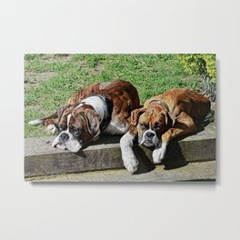 Pair of Boxers Metal Print