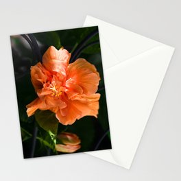Apricot Hibiscus Stationery Cards