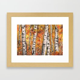 Birches Framed Art Print