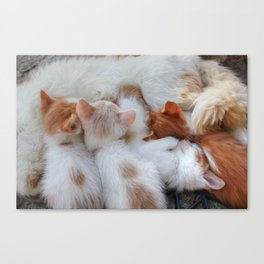 Little Balls of Fur! Canvas Print