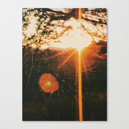 Shimmering Web • Appalachian Trail Canvas Print