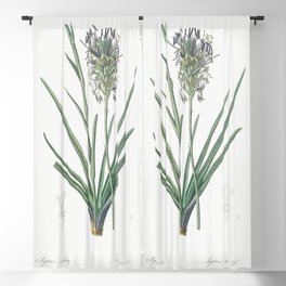 Agave spicata  from Les liliacees (1805) by Pierre Joseph Redoute (1759-1840) Blackout Curtain