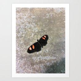 Black and Orange Beauty #2 Art Print