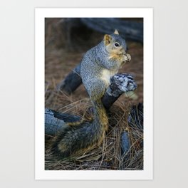 Mr. Squirrel! Art Print