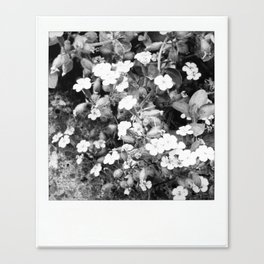 flowers in shades of grays Canvas Print