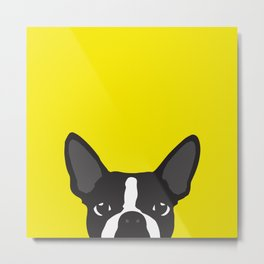 Boston Terrier Yellow Metal Print