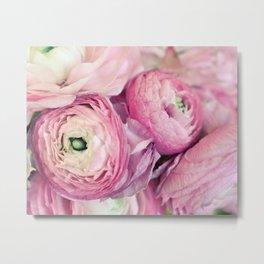 Pink Ranunculus Metal Print
