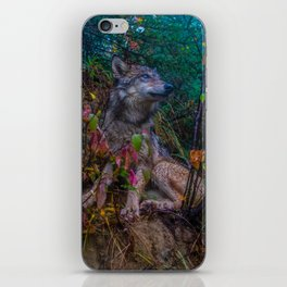 Wolf Pup in the Forest iPhone Skin