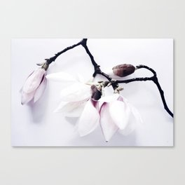 Magnolia Love Canvas Print
