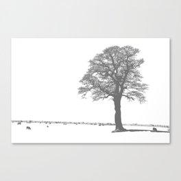 Feeling Sheepish Canvas Print