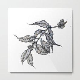 Arabica Coffee Leaves Metal Print
