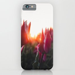 Tulips at sunrise | The Netherlands Travel Photography | Warm colored Photo Print iPhone Case