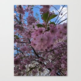Spring in the West End (4) Canvas Print