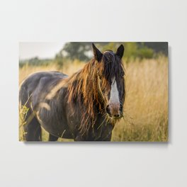 Autumn Horse Metal Print