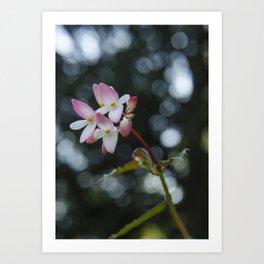 The Curious Pink Art Print