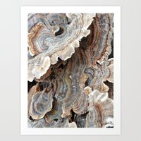 Fungi II Art Print