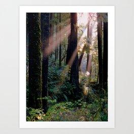 Forest Sunbeams Art Print