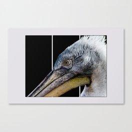 Pelican Cartoon  Canvas Print