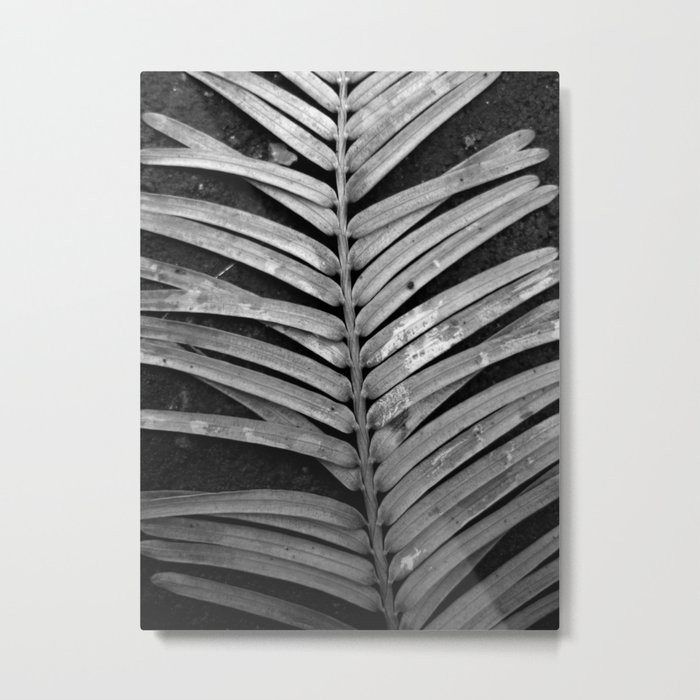 nature rib XI Metal Print