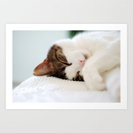 Cat Nap Art Print