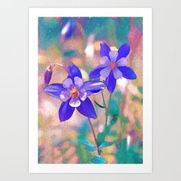 Colorado Columbine Flower Art Print