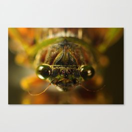 Cicada Chaos Canvas Print