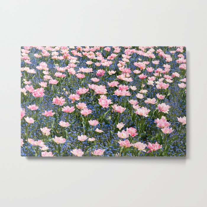 Pink Foxtrot tulips with blue forget-me-nots Metal Print