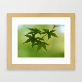 Maple Framed Art Print