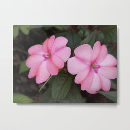Pink annuals Metal Print