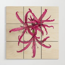 Nerine Lily Flower Wood Wall Art