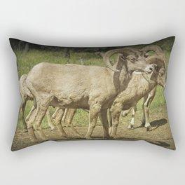 Bighorn Sheep along a Roadside in the Black Hills Rectangular Pillow