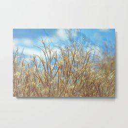 Grassy Nature Sunny Day Metal Print
