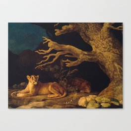 Lion and lioness - George Stubbs - 1771 Canvas Print