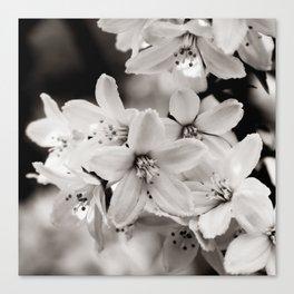 Little Whites ~ No.2 Leinwanddruck
