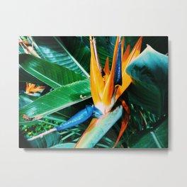 Orange Bird of Paradise Plant Metal Print