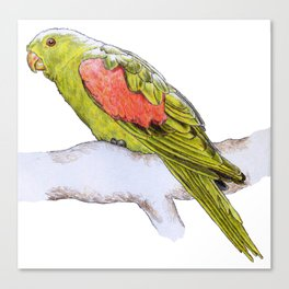 Snooping Parrot Canvas Print