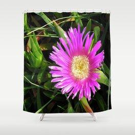 Pink Mesembryanthemum Shower Curtain